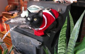 My cat 'Fatty' gets festive!