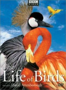 thelifeofbirds350