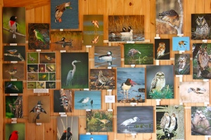Wall OF Prints - Sherwood Island Nature Center