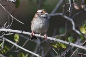 wt-sparrow